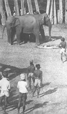 George Orwell: Shooting an Elephant